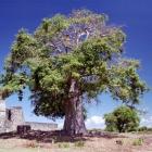タンザニア kirua03